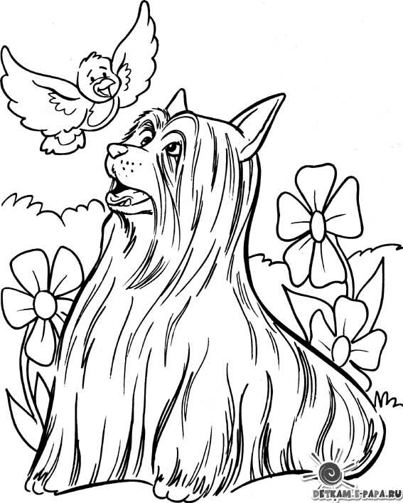 Dibujos para colorear Perros