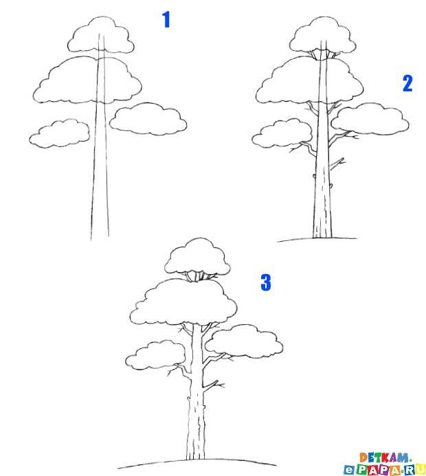 Dibuja un árbol de pino