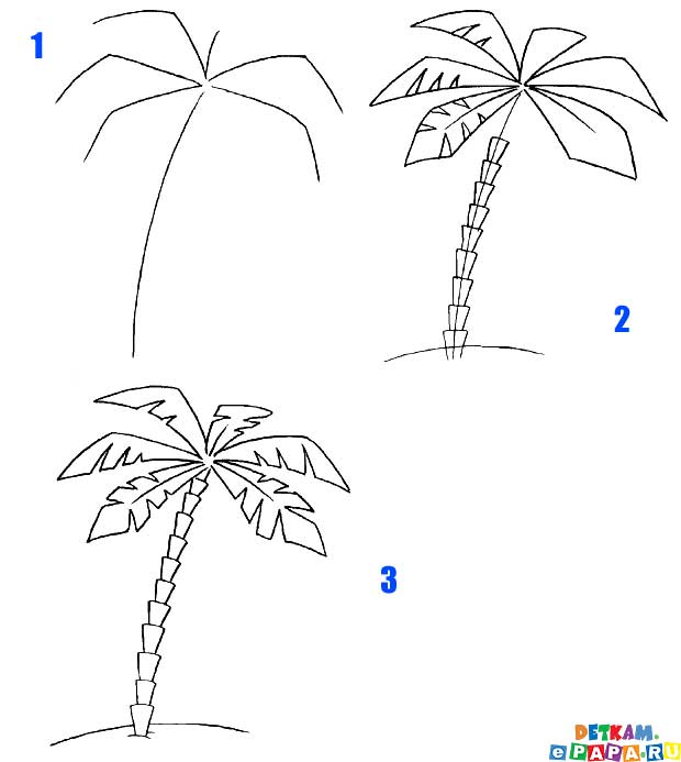 Dibuja un árbol de palma Cómo dibujar árboles. Aprender a dibujar